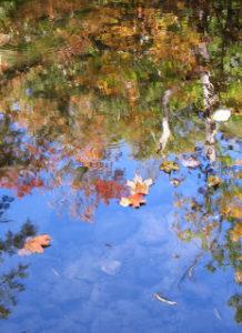 eg-reflection-3-10-13-desaulniers-anne-marie