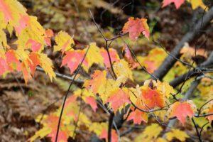 autumn sparkles