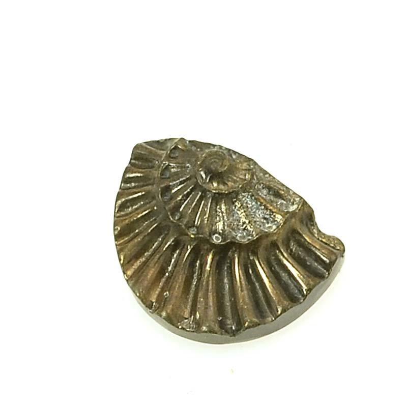 s63372 OOAK Stone Cabochon - 8x11mm Half Circle - Pyritized Ammonite Negative