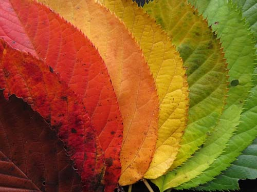 30 Days Hath September – and the colours will be magnificent!